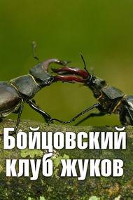Бойцовский клуб жуков