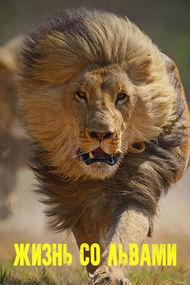 Жизнь со львами