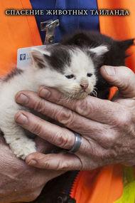 Спасение животных Таиланда