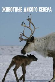 Животные дикого Севера