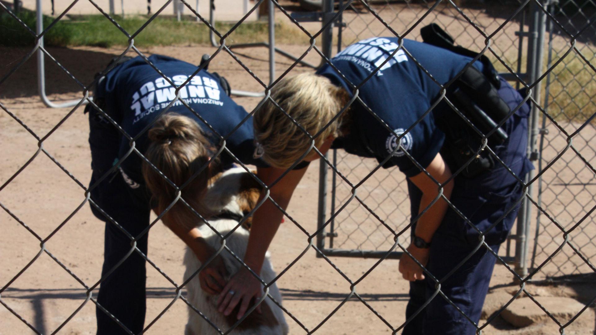 Защитники животных Финикса